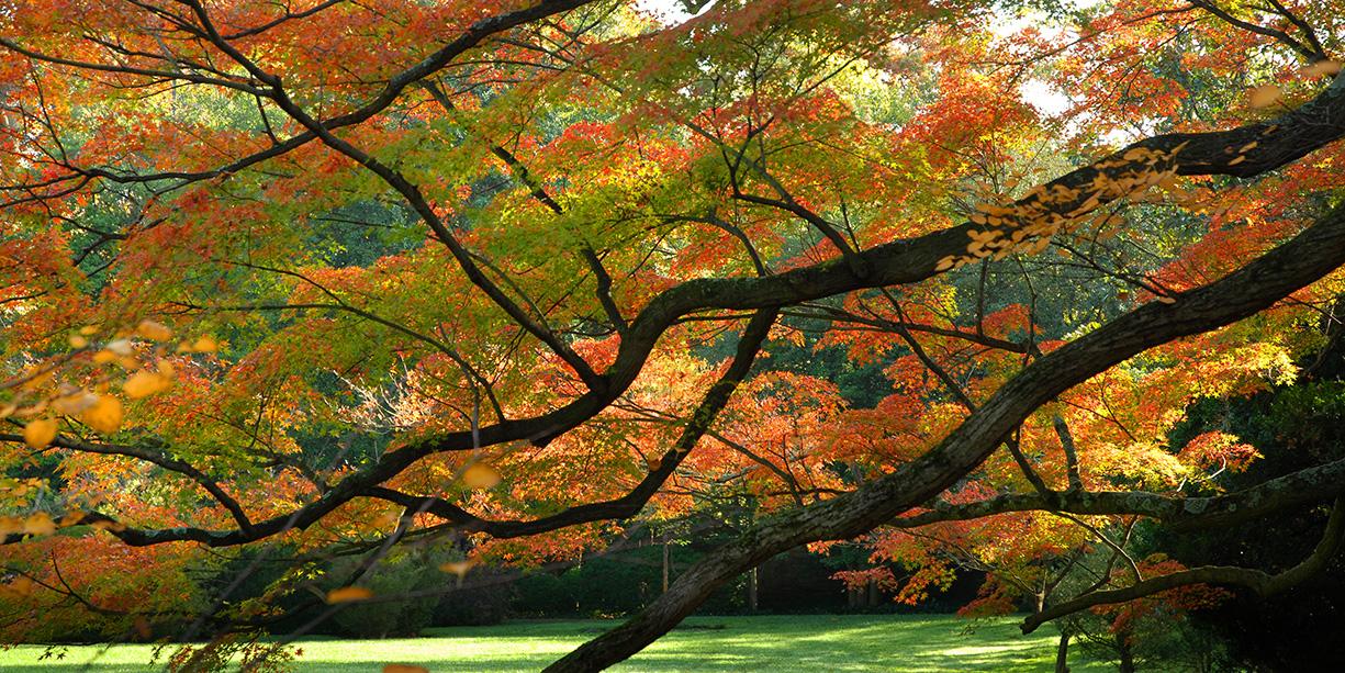 Gardens Fall Banner