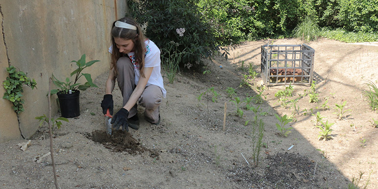 May: Deirdre Moore places new plants to draw pollinators, including milkweed and silphium, in the swale by the Dumbarton Oaks staff parking lot and garden offices.