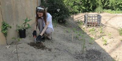Pollinator 1: Planting
