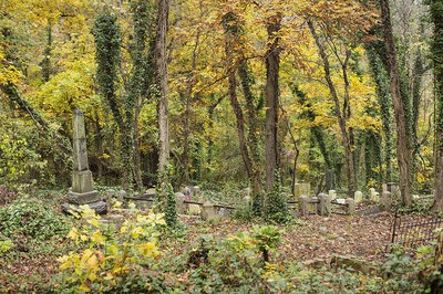 Fig. 2: Autumn in the original section of East End Cemetery (Palmer 2017–2018)