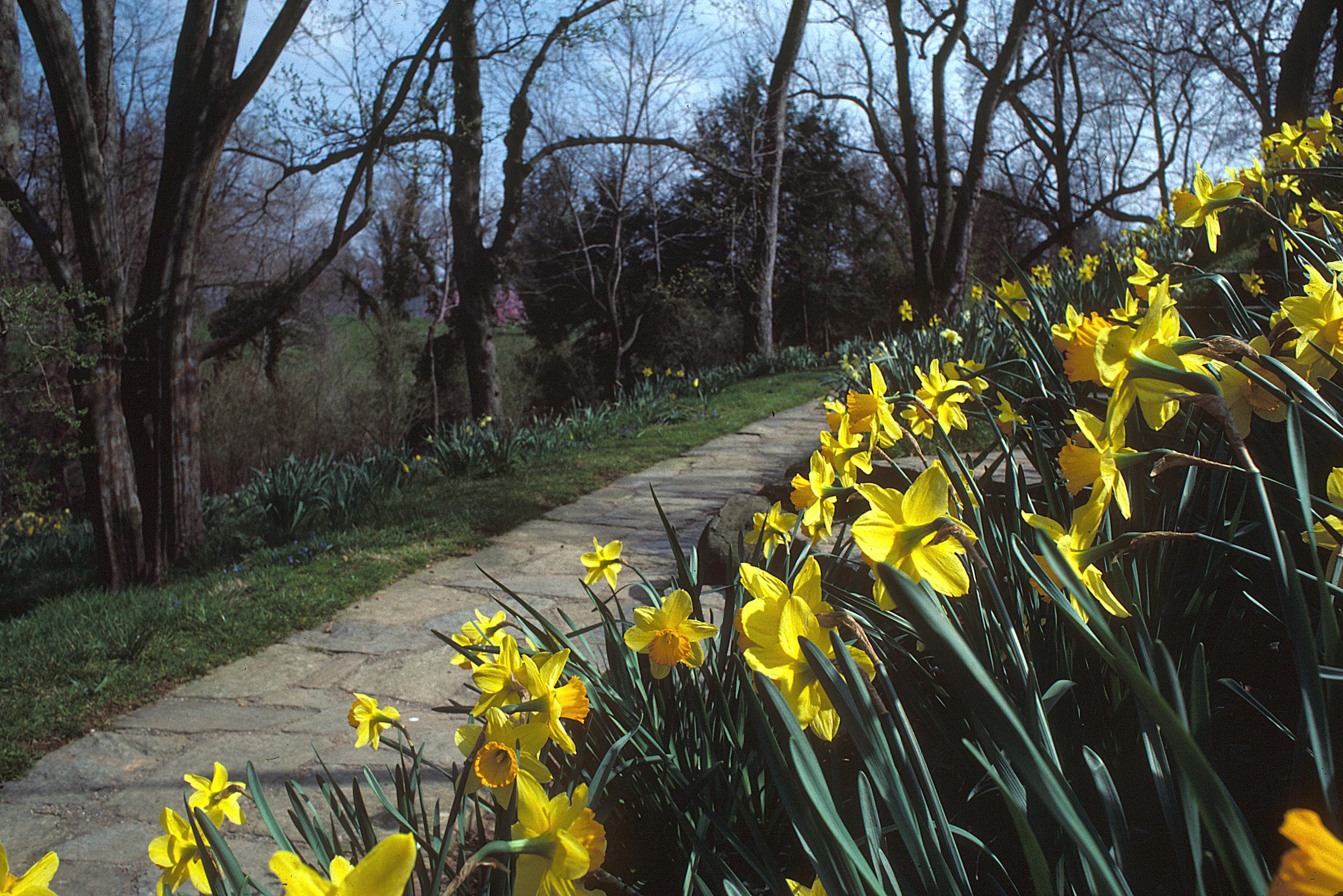 Mélisande's Allée, April 1983. Dumbarton Oaks Archives, AR.GP.31.037