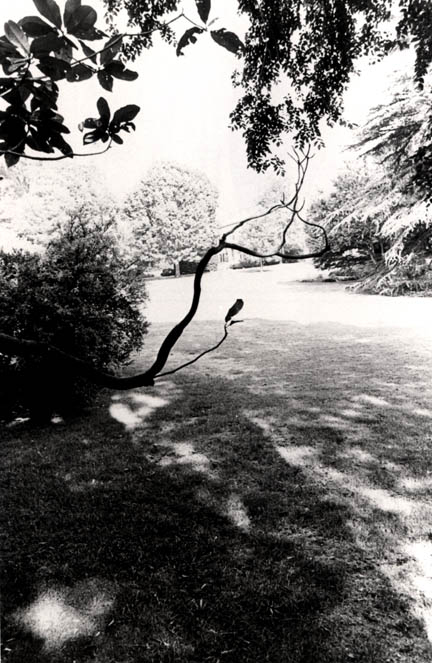 Joe Mills, Untitled [Horizontal Tree Branch on South Lawn], 1979, HC.PH.1995.11