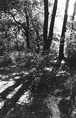 Joe Mills, Untitled [Trees with Shadows], 1979, HC.PH.1995.07