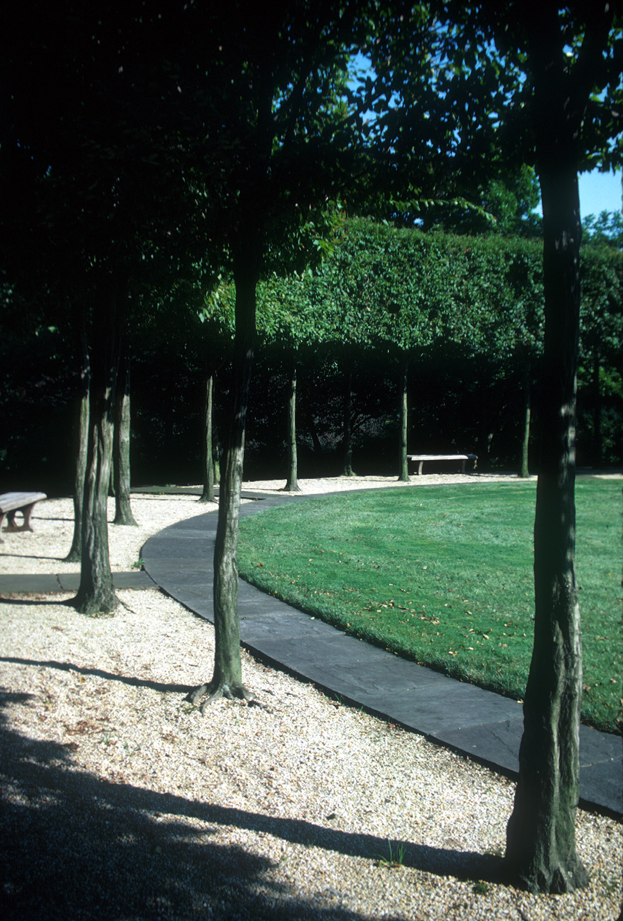Ellipse with pleached hornbeam trees