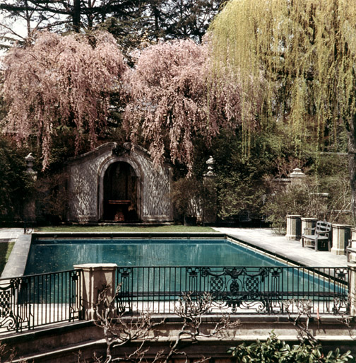 Willows overhanging the Dumbarton Oaks swimming pool