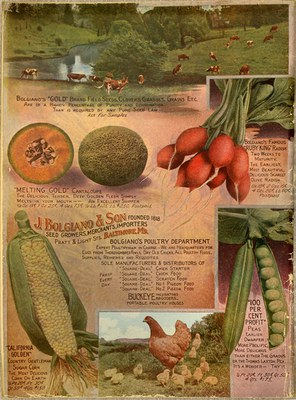Seed Catalogue 10