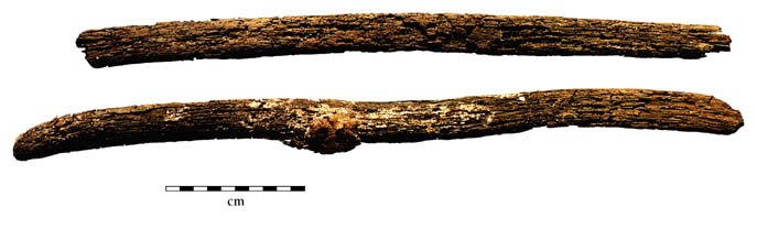 Fig. 5: Archer's bow fragments from Conchapata (Cook and Isbell 2000–2001)