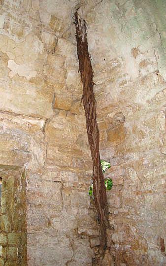 Fig. 7: A large tree root that enters Room 3 (Golden et al. 2004–2005)