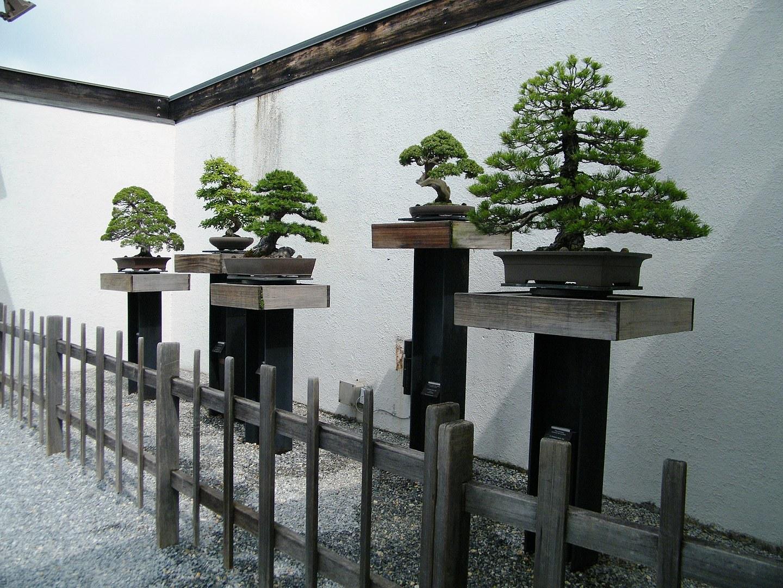 National Bonsai And Penjing Museum Dumbarton Oaks