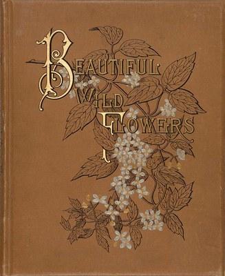 Beautiful wild flowers of America