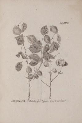 Johann Amman