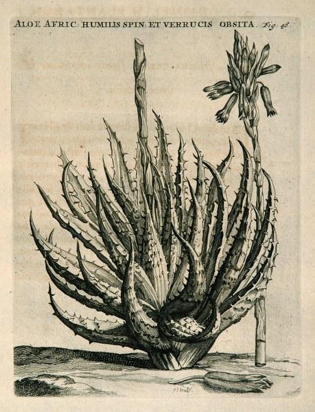 Horti medici Amstelaedamensis (1715)