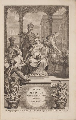 Amsterdam's Hortus Medicus and the Commelins