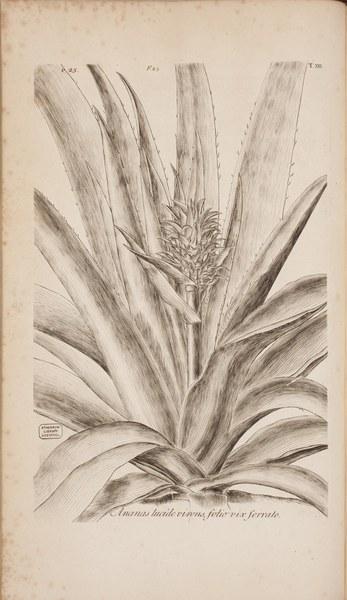 Hortus Elthamensis