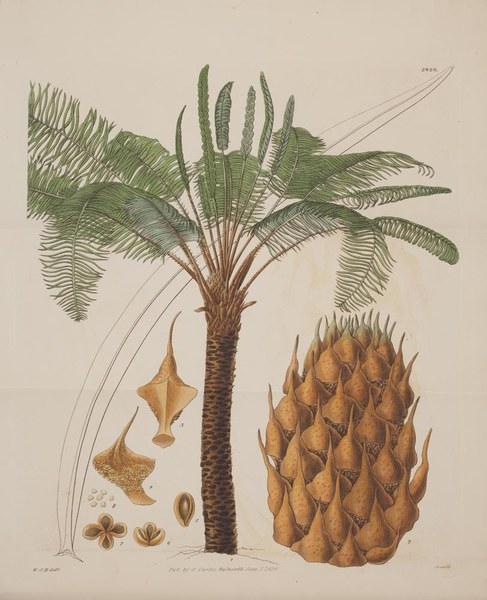 The botanical magazine, or, Flower-garden displayed