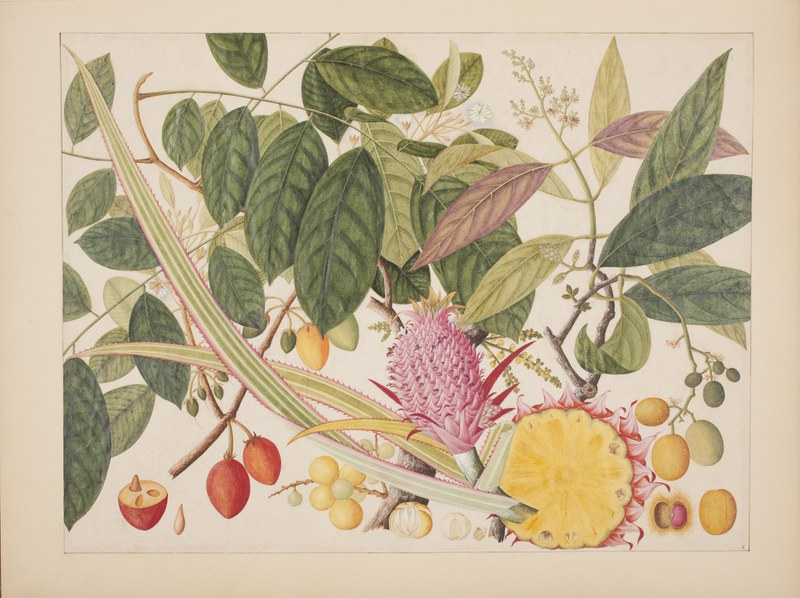 Album of watercolors of Asian fruits