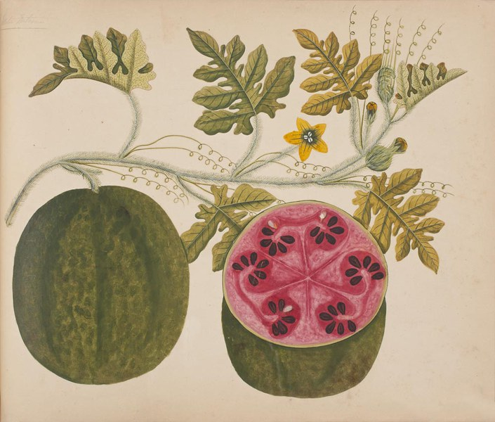 Album of watercolors of Asian fruits and flowers