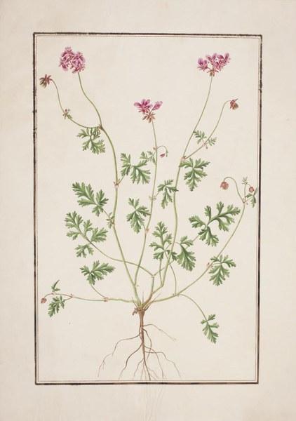 Collection de botanique