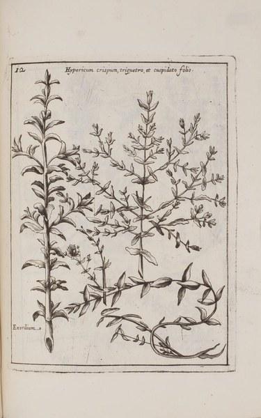 Museo di piante rare della Sicilia, Malta, Corsica, Italia, Piemonte, e Germania