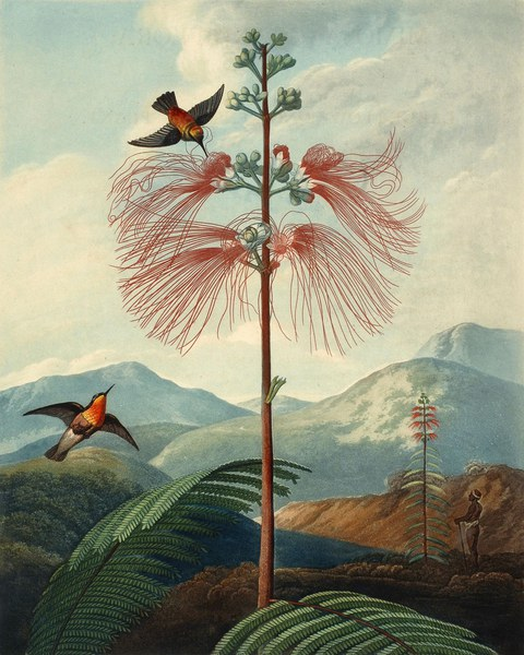 New illustration of the sexual system of Carolus von Linnaeus... and the Temple of Flora
