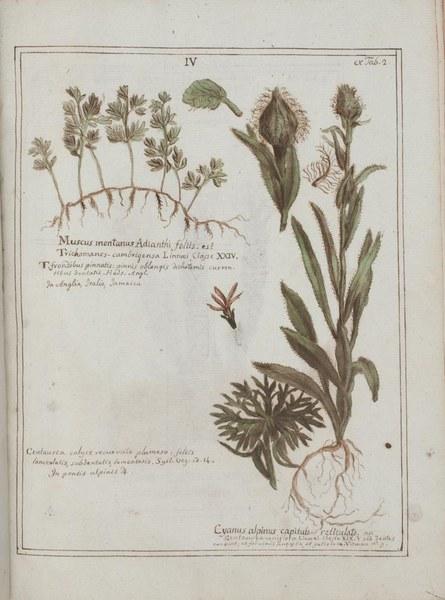 Boccone Museum rariorum plantarum: nominibus linnaei specificis