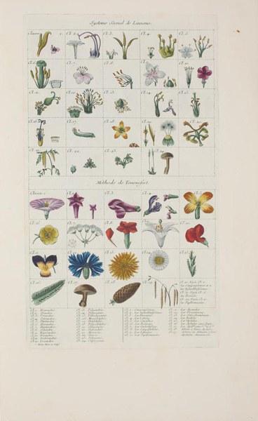 Cours de botanique : pour servir à l'éducation des enfants de S.A. Sérenissime Monseigneur le Duc d'Orleans