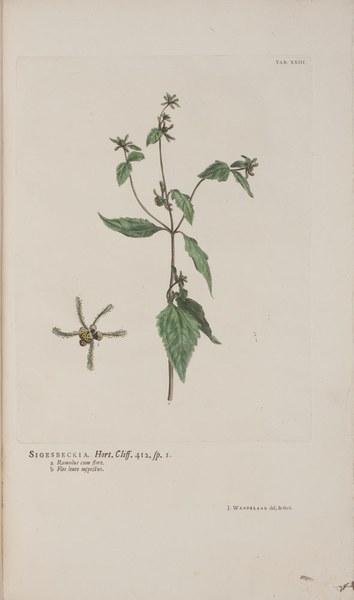 Hortus Cliffortianus