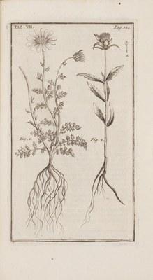 Synopsis methodica stirpium Britannicarum