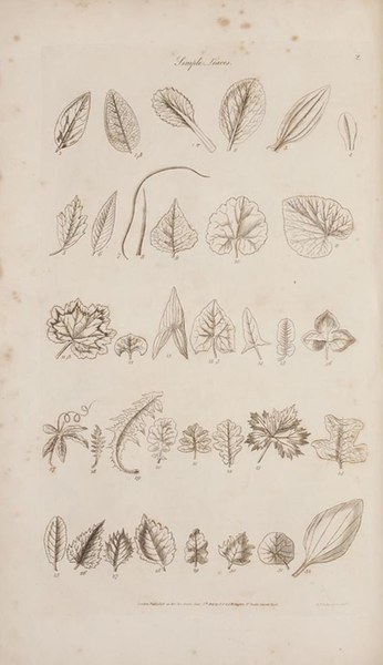 The gardener's and botanist's dictionary