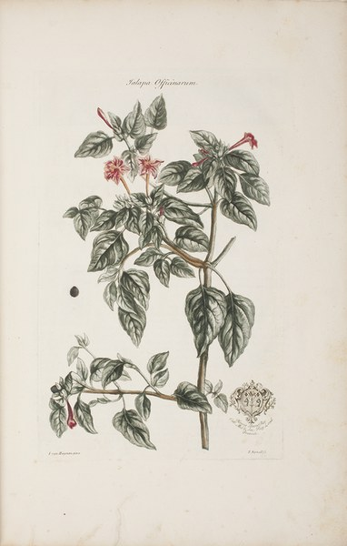 Historia plantarum rariorum