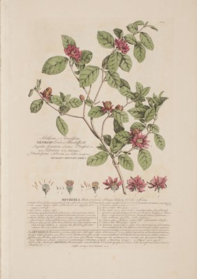 Plantae et papiliones rariores