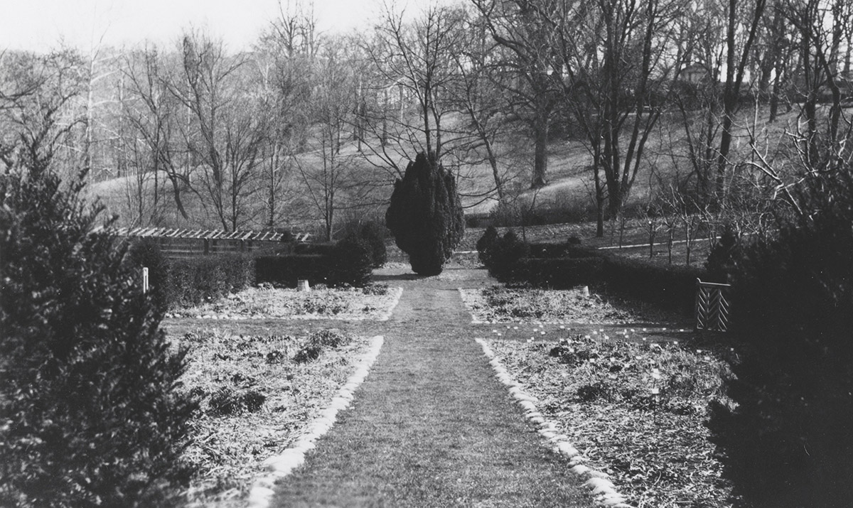 Eastward view of the Herbaceous Border, Irish yew, 1932 (detail)