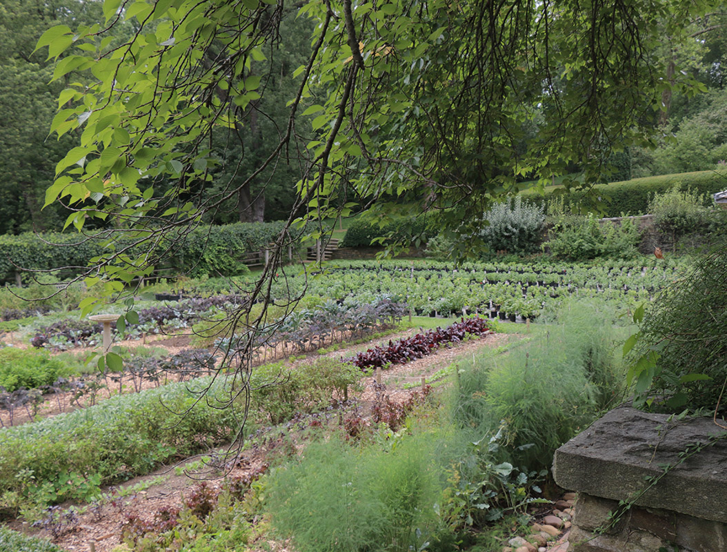 Kitchen Garden, 2015 (detail)