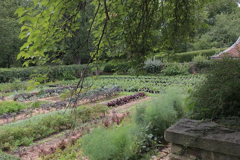 Kitchen Gardens, July 2015