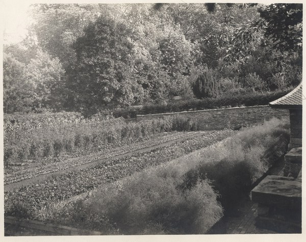 Kitchen Garden, lower level, looking southeast to yew, 1927–1932