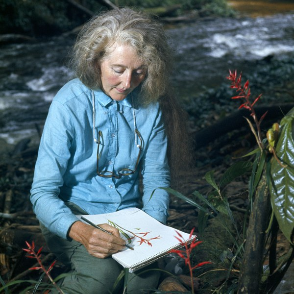 Margaret Mee in the Amazon