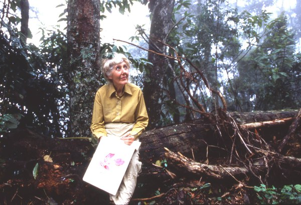 Margaret Mee sketching in the Amazon rainforest, Rio Negro, 1988