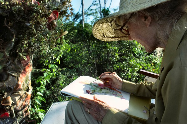 Margaret Mee sketching Selenicereus wittii Anavilhanas, 1988, Rio Negro, Amazon