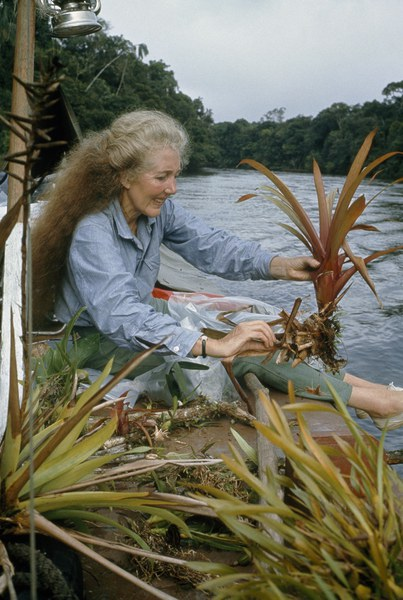 Mee handling a plant specimen while on her fourth expedition, 1967