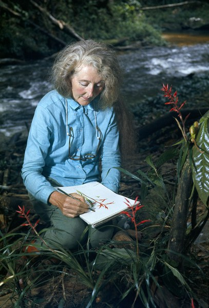Mee sketching a heliconia, 1967