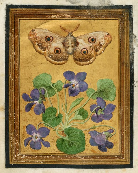 Paintings of flowers, butterflies, and insects