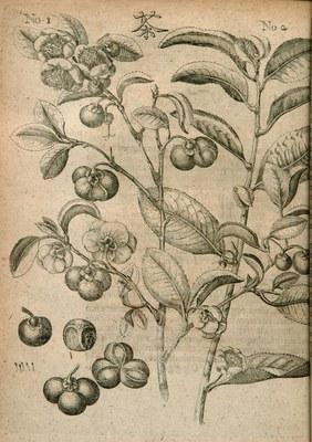 Amœnitatum exoticarum politico - physico - medicarum