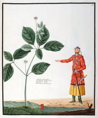 Collection de curiosites du Royaume des plantes